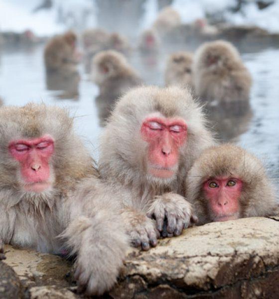The Year of the Monkey – Celebrating Chinese New Year 2016