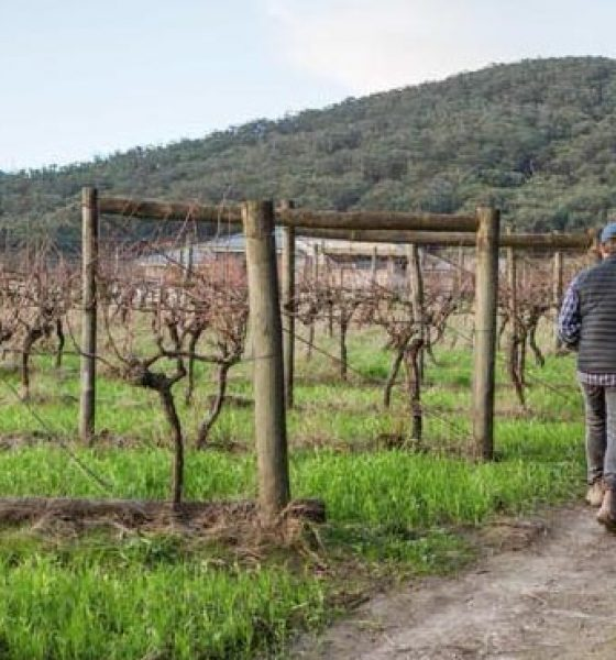 Tales of a travelling wine merchant