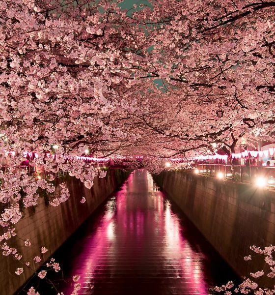 Insights from an expert, from toys to cherry blossom, in Tokyo