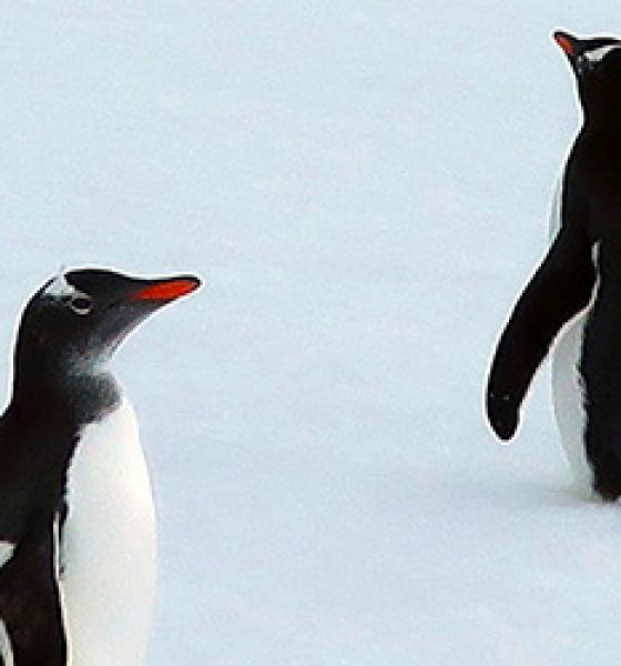 Penguins: tip of the iceberg on bucket list adventure